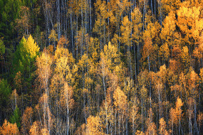 大兴安岭密林秋景