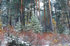 彩林秋雪风景