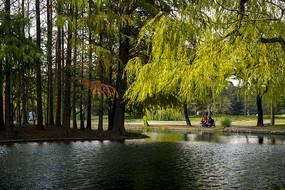 城市公园景观