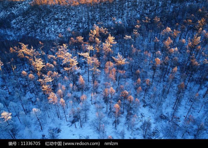 大兴安岭冬季红树林雾凇图片