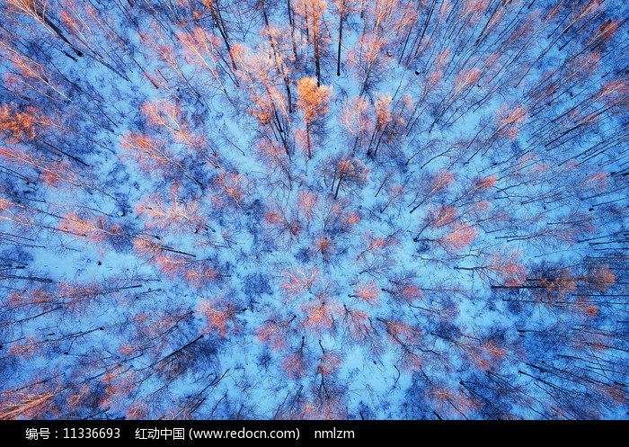 大兴安岭冬季林海雪原松林图片