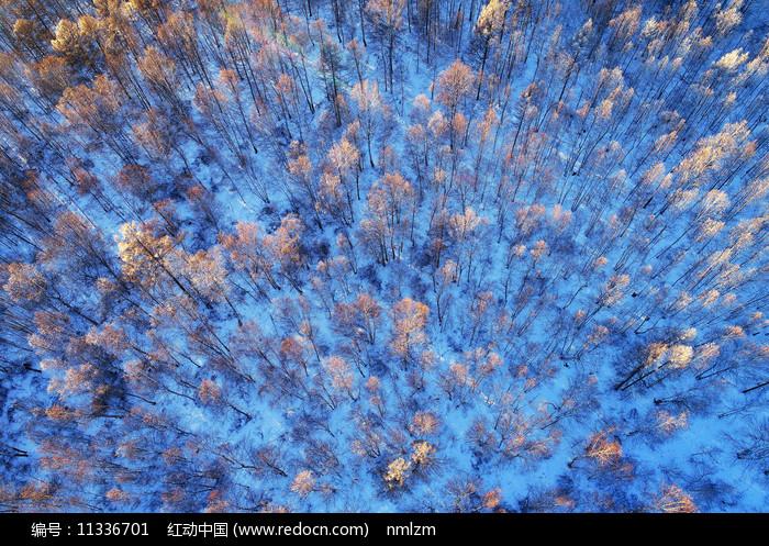 大兴安岭冬季树林雾凇夕照图片