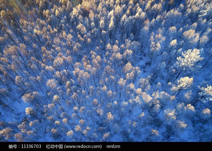 大兴安岭冬季雪原密林雪景图片
