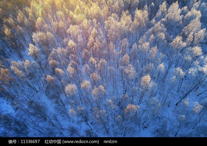 大兴安岭冬季阳光雪林图片