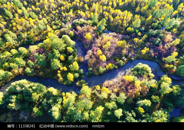 航拍大兴安岭秋季森林小河图片