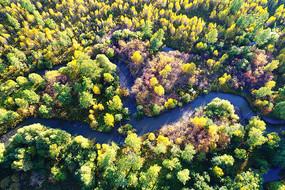 航拍大兴安岭秋季森林小河
