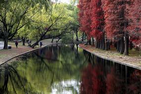 红绿相映对河成趣