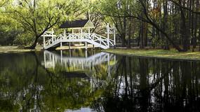 小桥流水树成荫