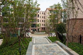 重庆巫山摩天岭绿色家居环境