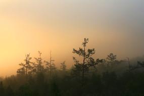 大兴安岭森林晨雾朝阳