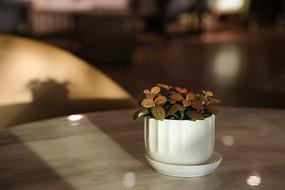 咖啡厅里的植物