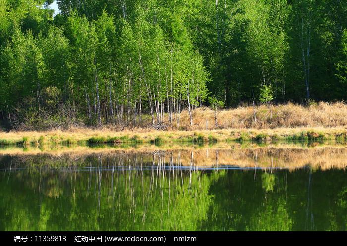 大兴安岭湖泊茂密树林图片