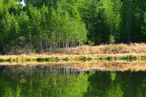 大兴安岭湖泊茂密树林