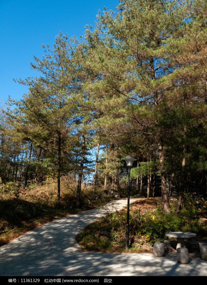 蓝天下的绿色森林图片