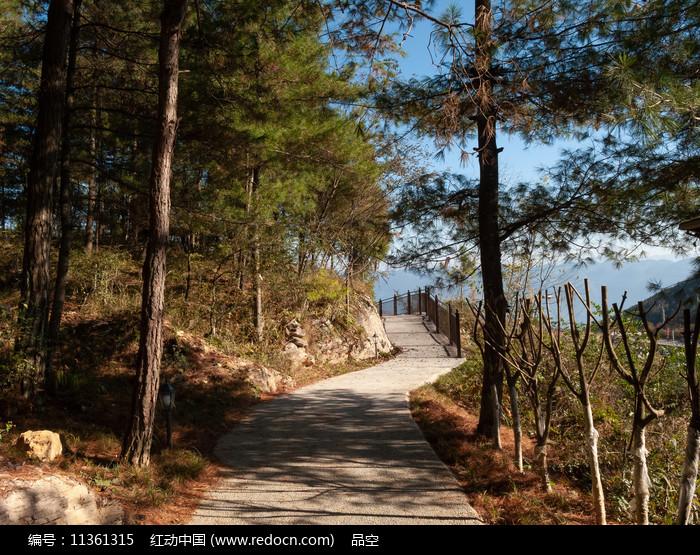绿色的森林和健身步道图片