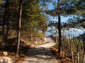 绿色的森林和健身步道