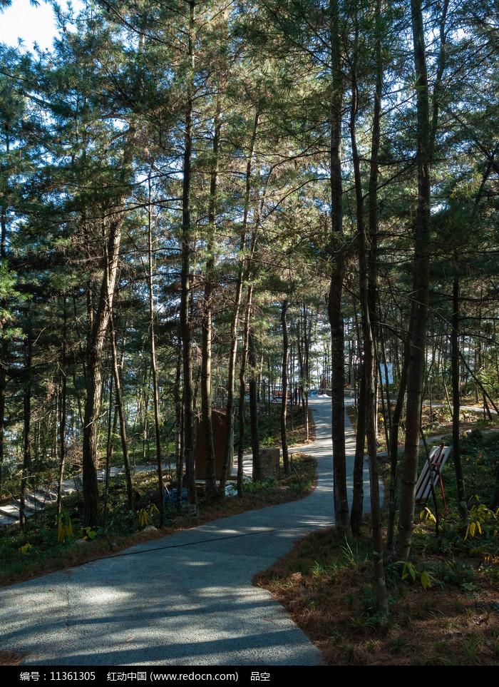 绿色的松树林图片