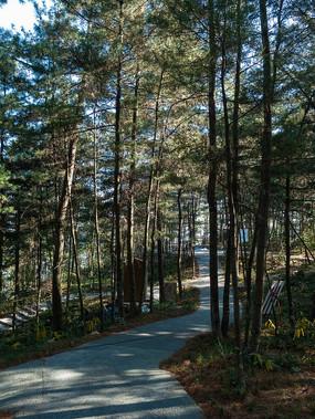 绿色的松树林