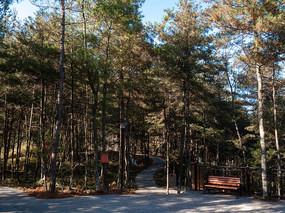 绿色森林参天的大树