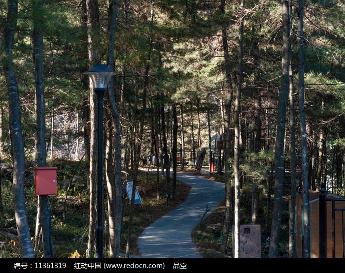 绿色森林的休闲小路图片