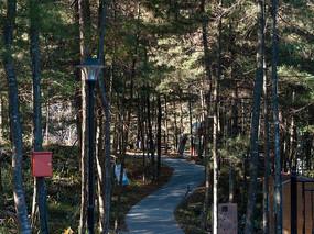 绿色森林的休闲小路