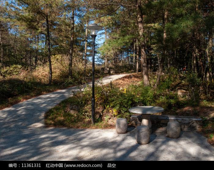 绿色森林中弯弯的小路图片