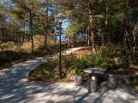 绿色森林中弯弯的小路