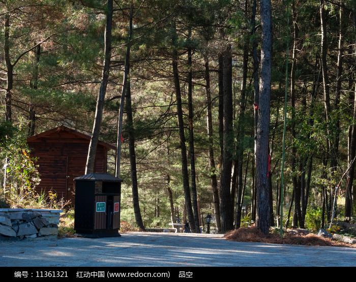 森林的绝色生机图片