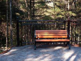 森林里一把空着的条椅