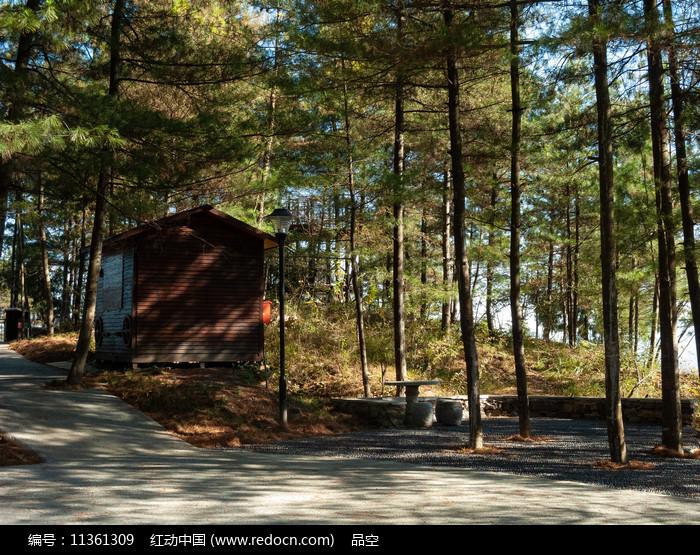 森林阳光和一间小屋图片