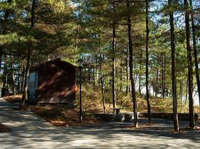 森林阳光和一间小屋