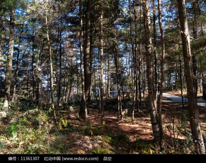 森林中斑驳的阳光图片