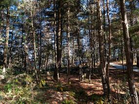 森林中斑驳的阳光