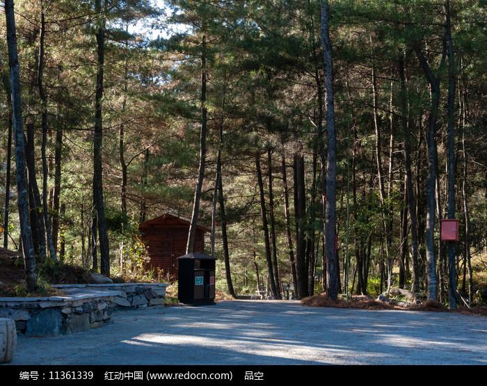 森林中的休闲健身场地图片