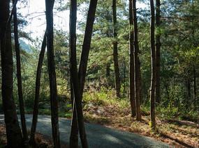 森林中高大的树木