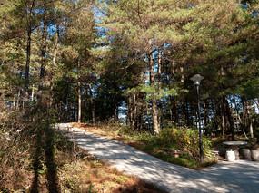 温暖的阳光洒向绿色森林