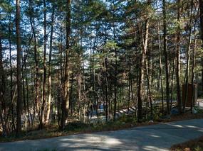 西部山区的森林
