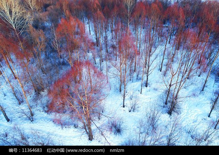 大兴安岭雪域红树林图片