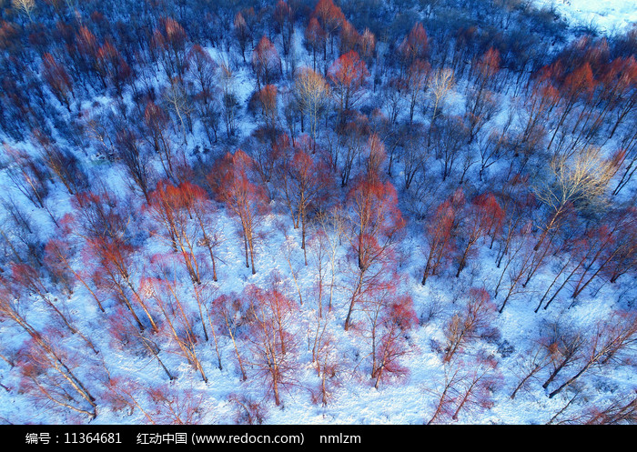 航拍大興安嶺雪域紅樹林圖片