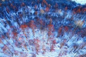 航拍大兴安岭雪域红树林