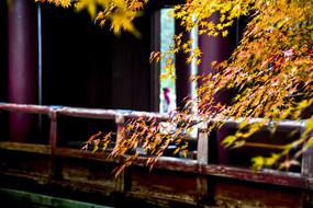 秋日秋景枫叶红
