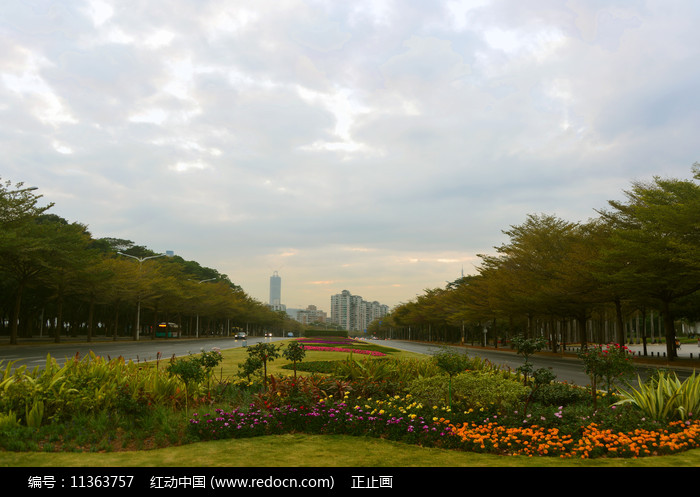 深圳主干道深南大道绿化图片