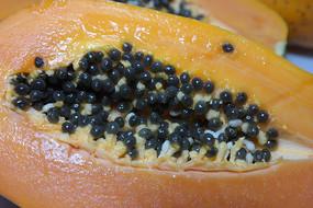 黑色木瓜籽特写