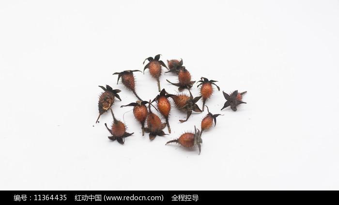 一堆成熟的金樱子图片图片