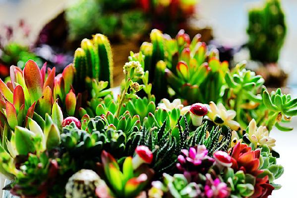 多种类的盆栽多肉植物