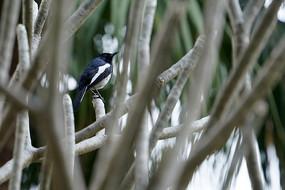 密林中的鸟儿栖息