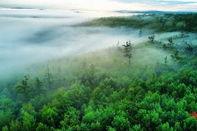大兴安岭雾漫绿色树林