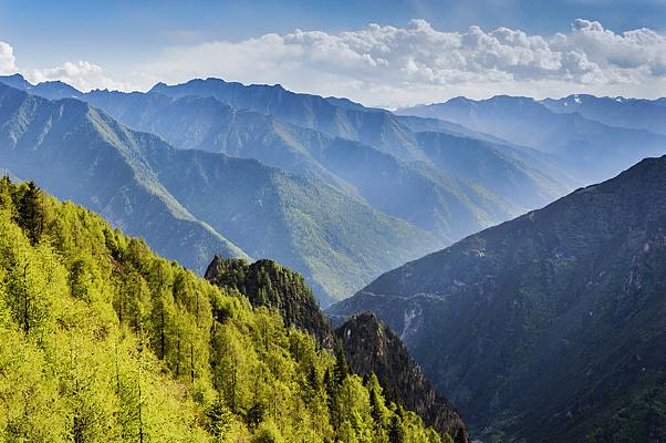 山峰下的树林