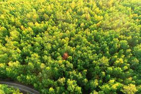 大兴安岭林区秋季森林风光
