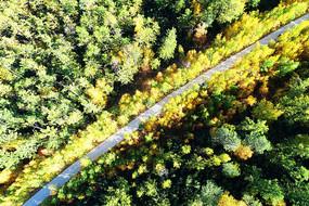 航拍彩色林海公路
